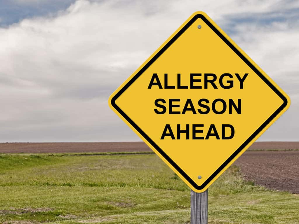 Allergy Season Ahead Street Sign